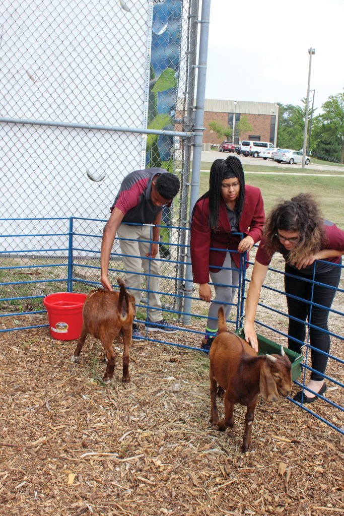 Image of students with goats.