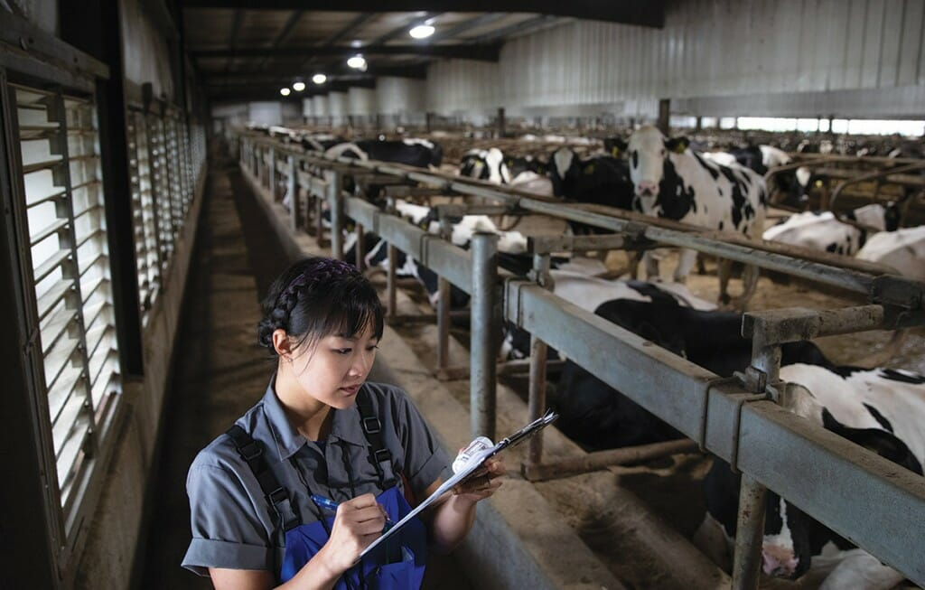 Image of Jennifer Van Os working with cows.
