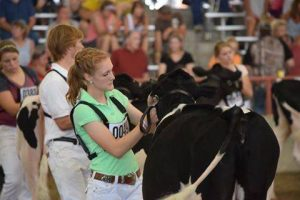 Allie Breunig showing one of her cows