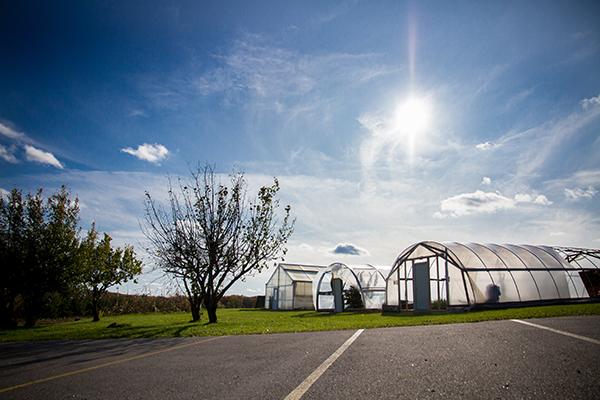 Image of hoop houses