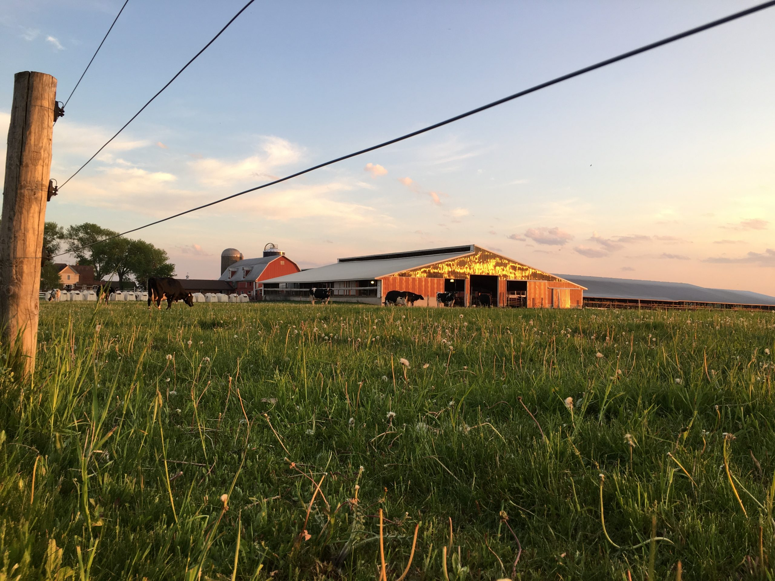 An image of the Brey Cycle Farm with the barn, field, and cows in the background.